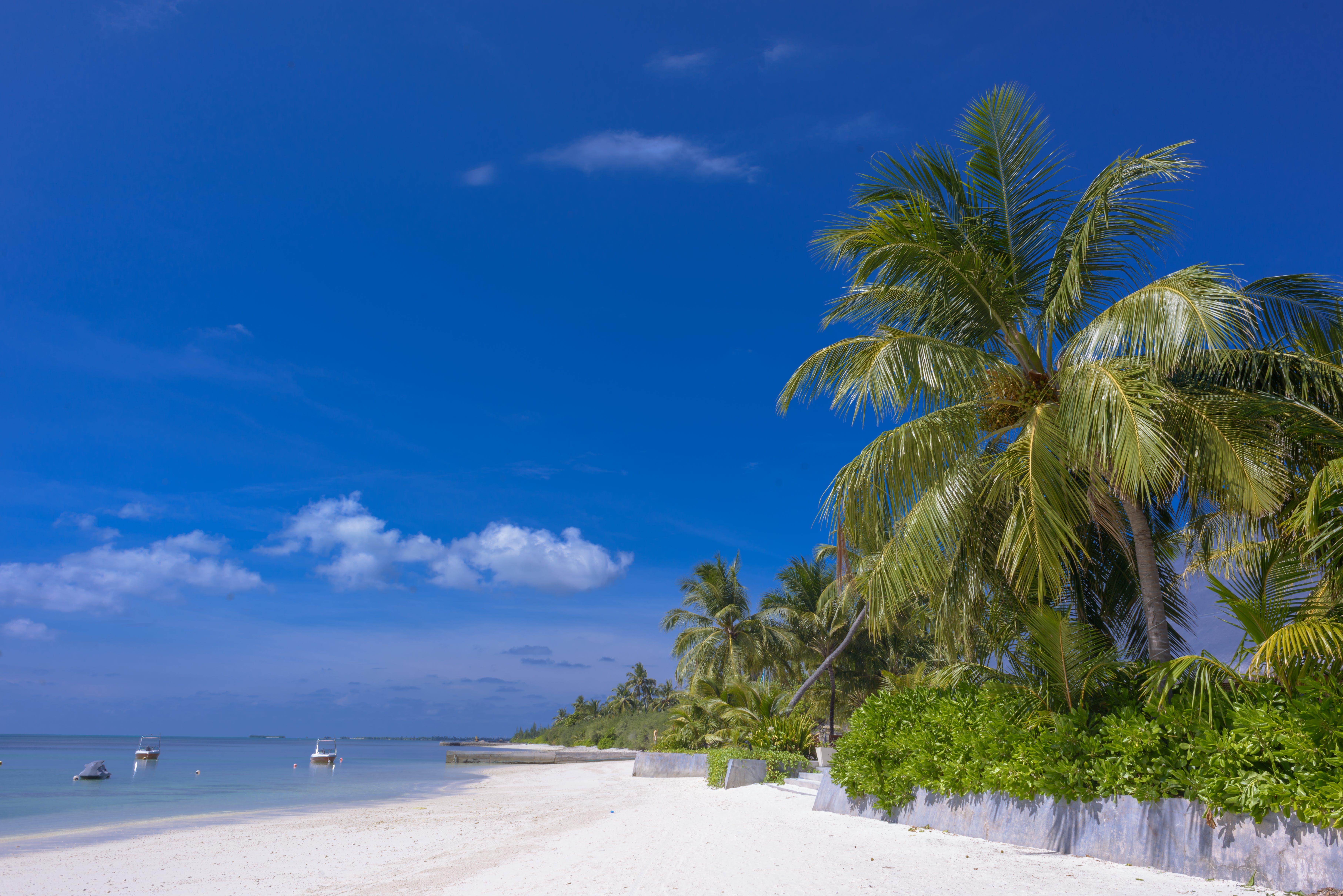 경치가 좋은, 나무, 모래, 물의 무료 스톡 사진