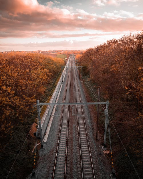 Train Track Between Dried Forest