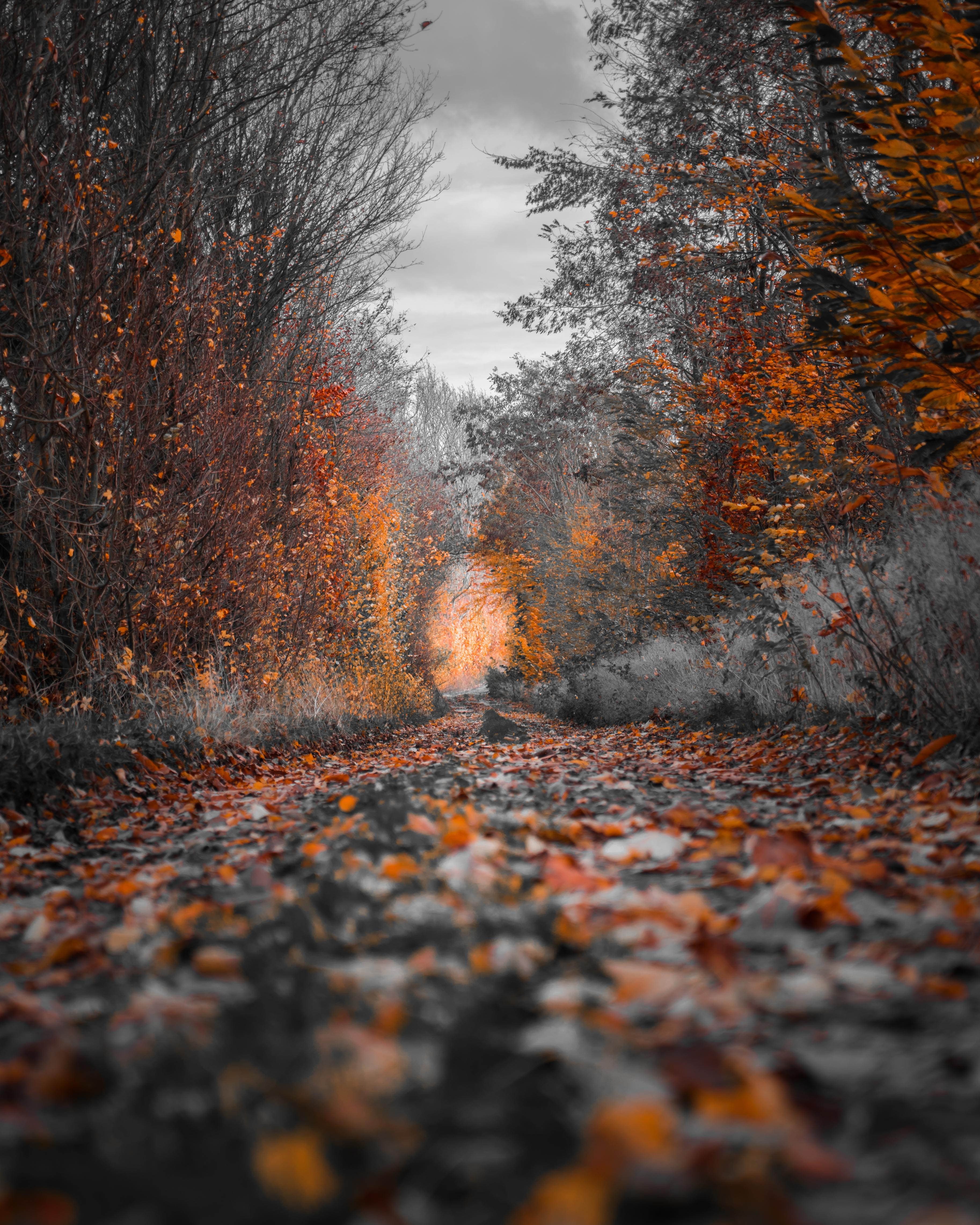 pexels-photo-1591447.jpeg
