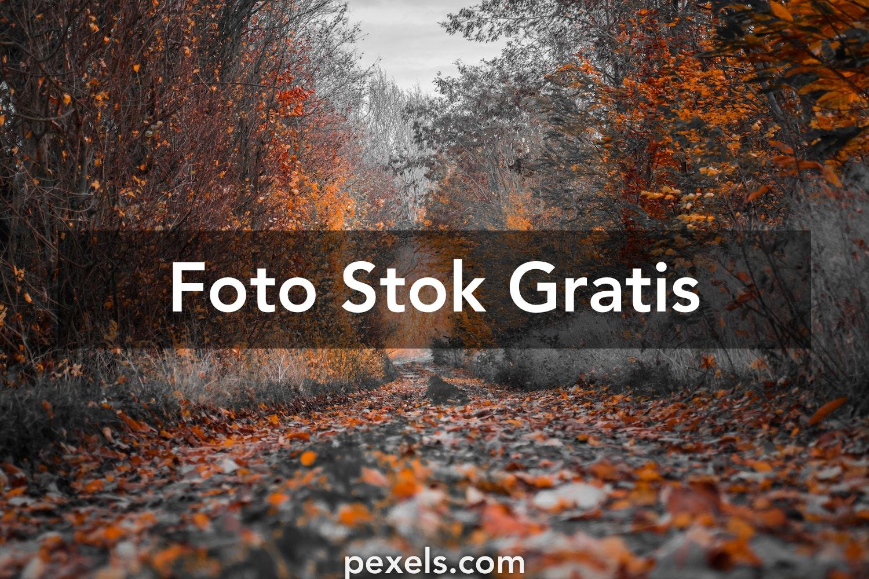 1000 Foto Latar Belakang Hd Pexels Foto Stok Gratis