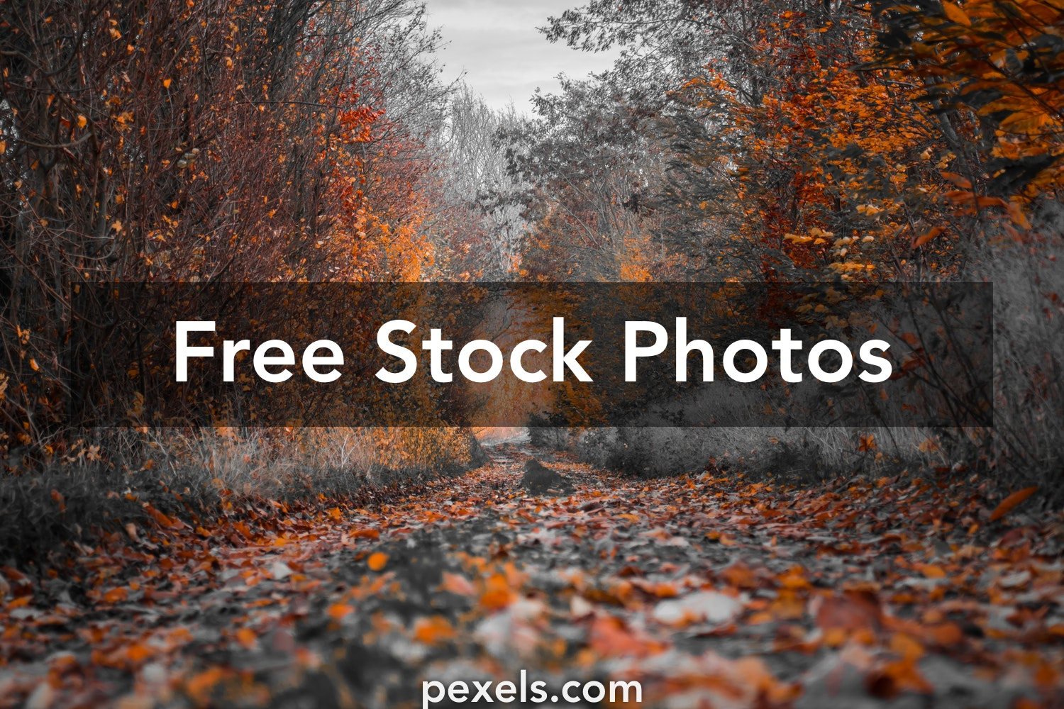 1000 Beautiful Hd Background Photos Pexels Free Stock Photos