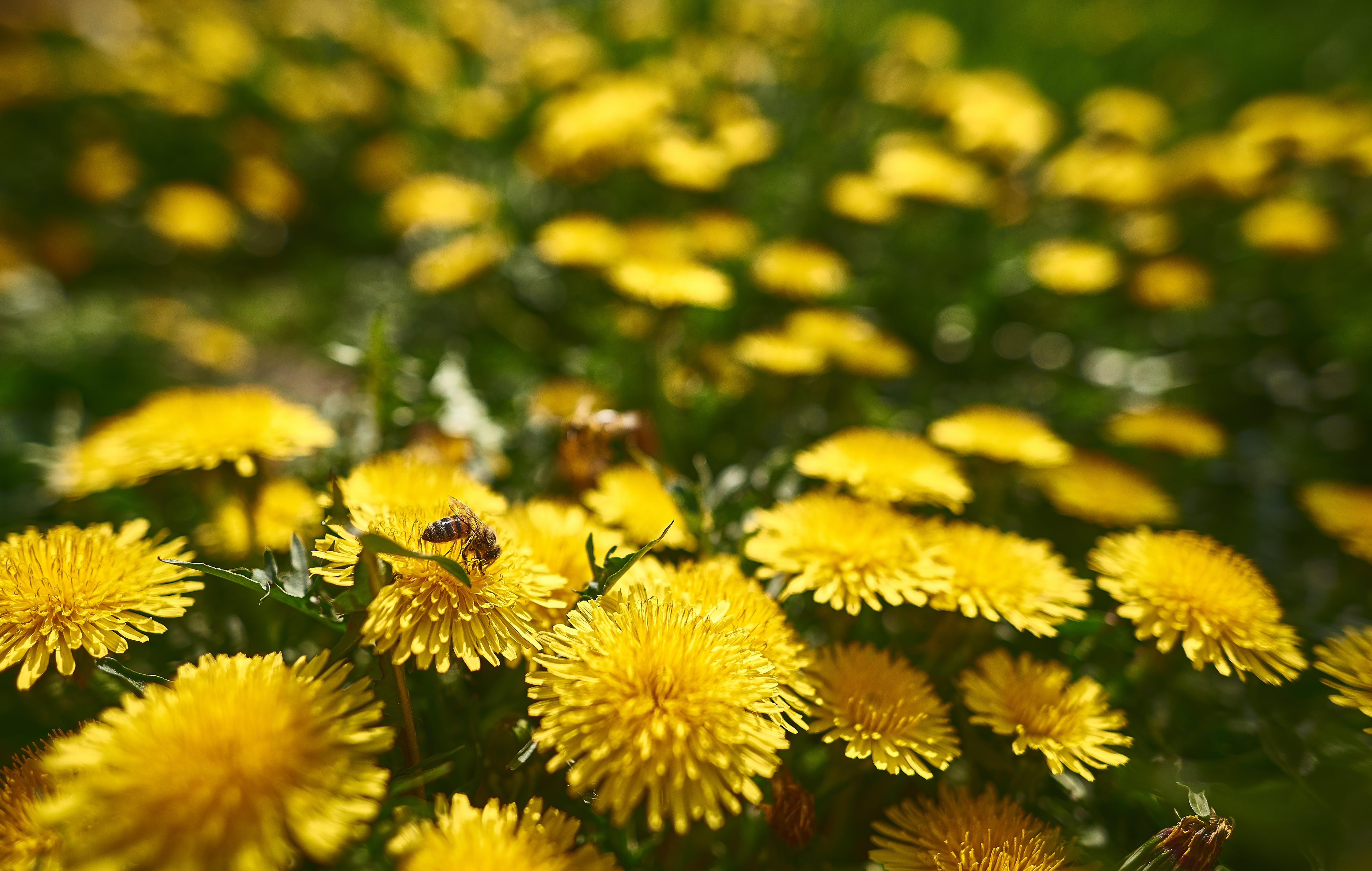 Selective Focus Photo of Yellow Flowers