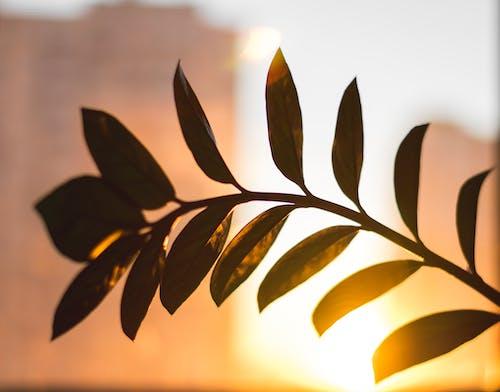 Immagine gratuita di colore, luce del sole, luminoso, natura morta