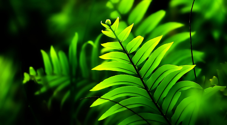Close-Up Photo of Fern Plant