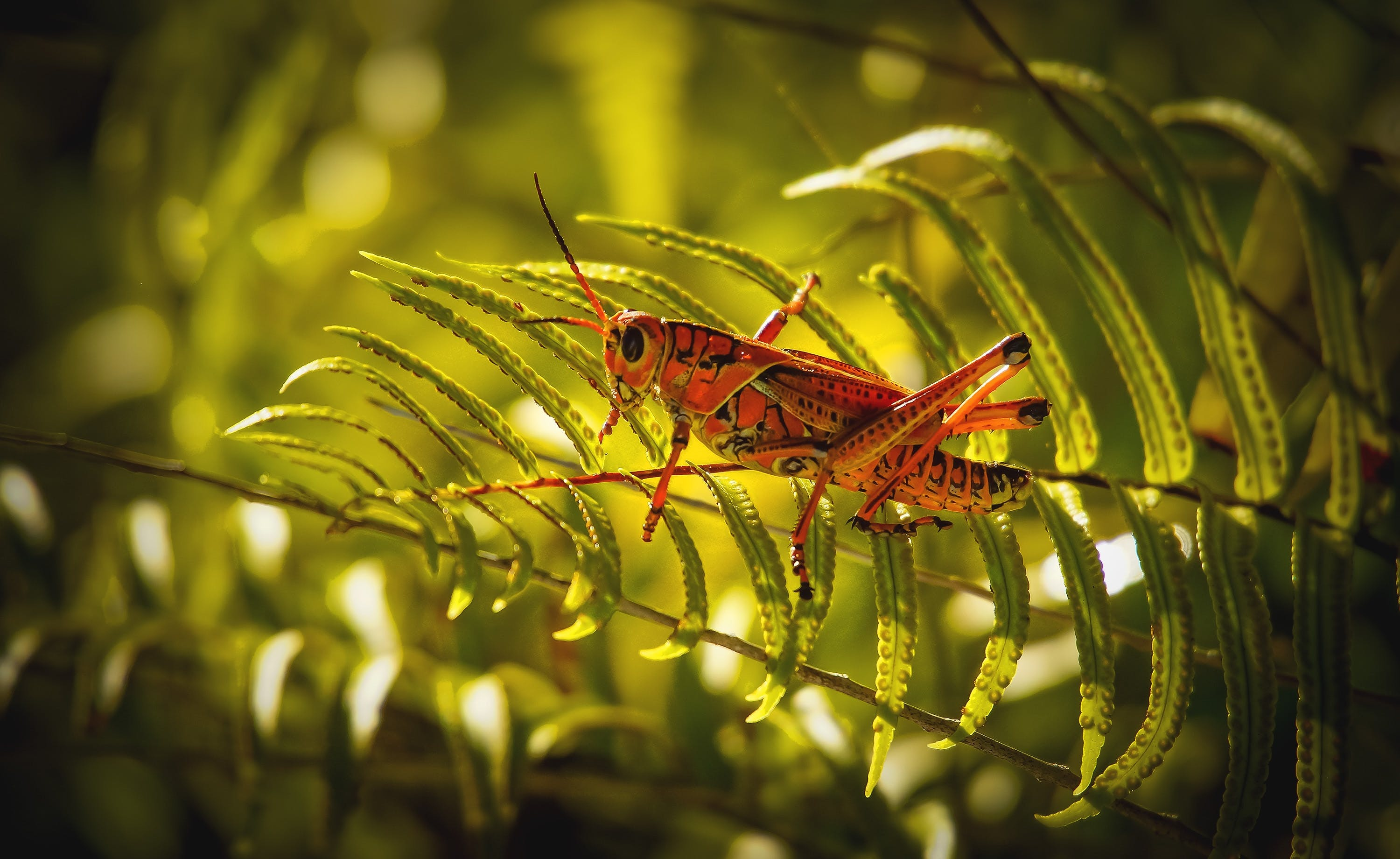 Close-Up Photo of Grasshopper Perched On Fern Plant
