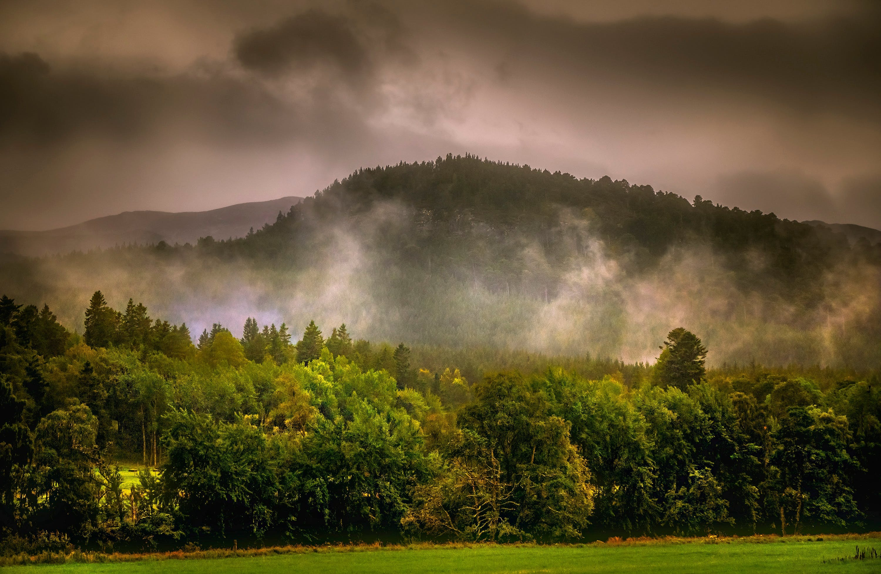 Forest Under Gray Clouds