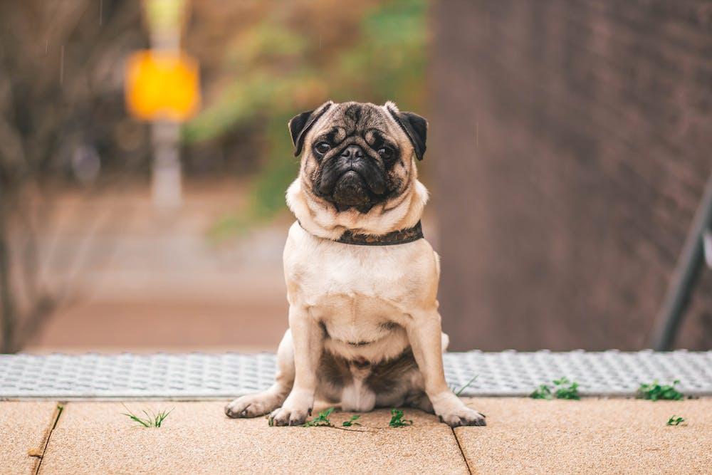 Dog sitting on the floor. | Photo: Pexels