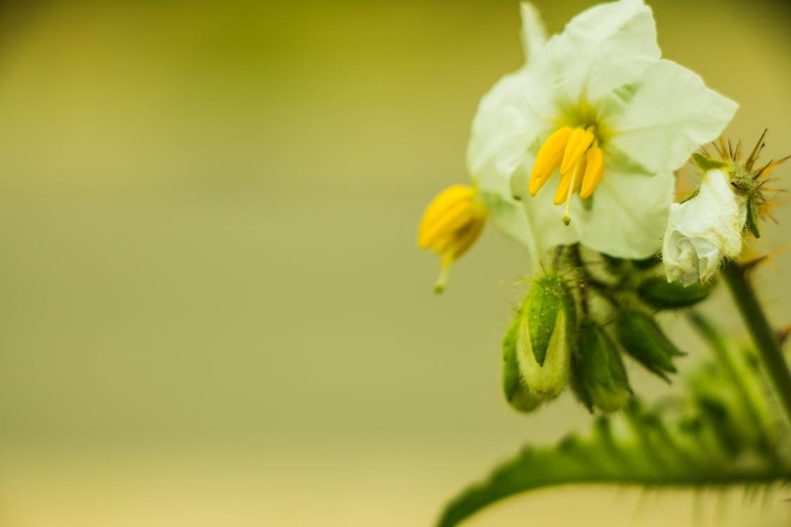 krásné květiny, kytka, láska