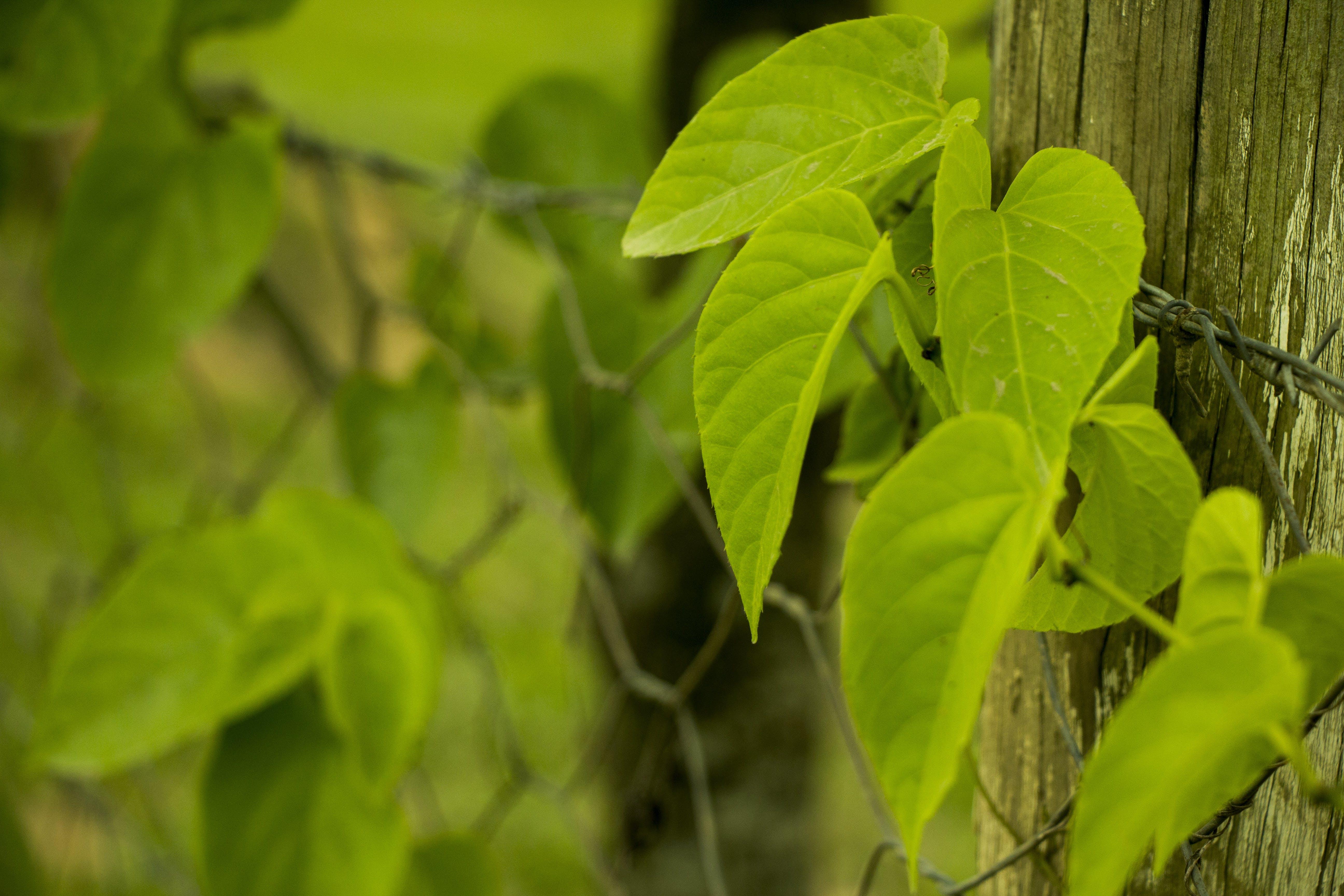 Kostenloses Stock Foto zu bauernhof, grün, natur