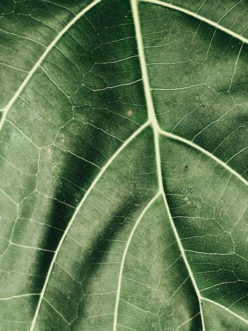 Фотография крупным планом зеленого листа