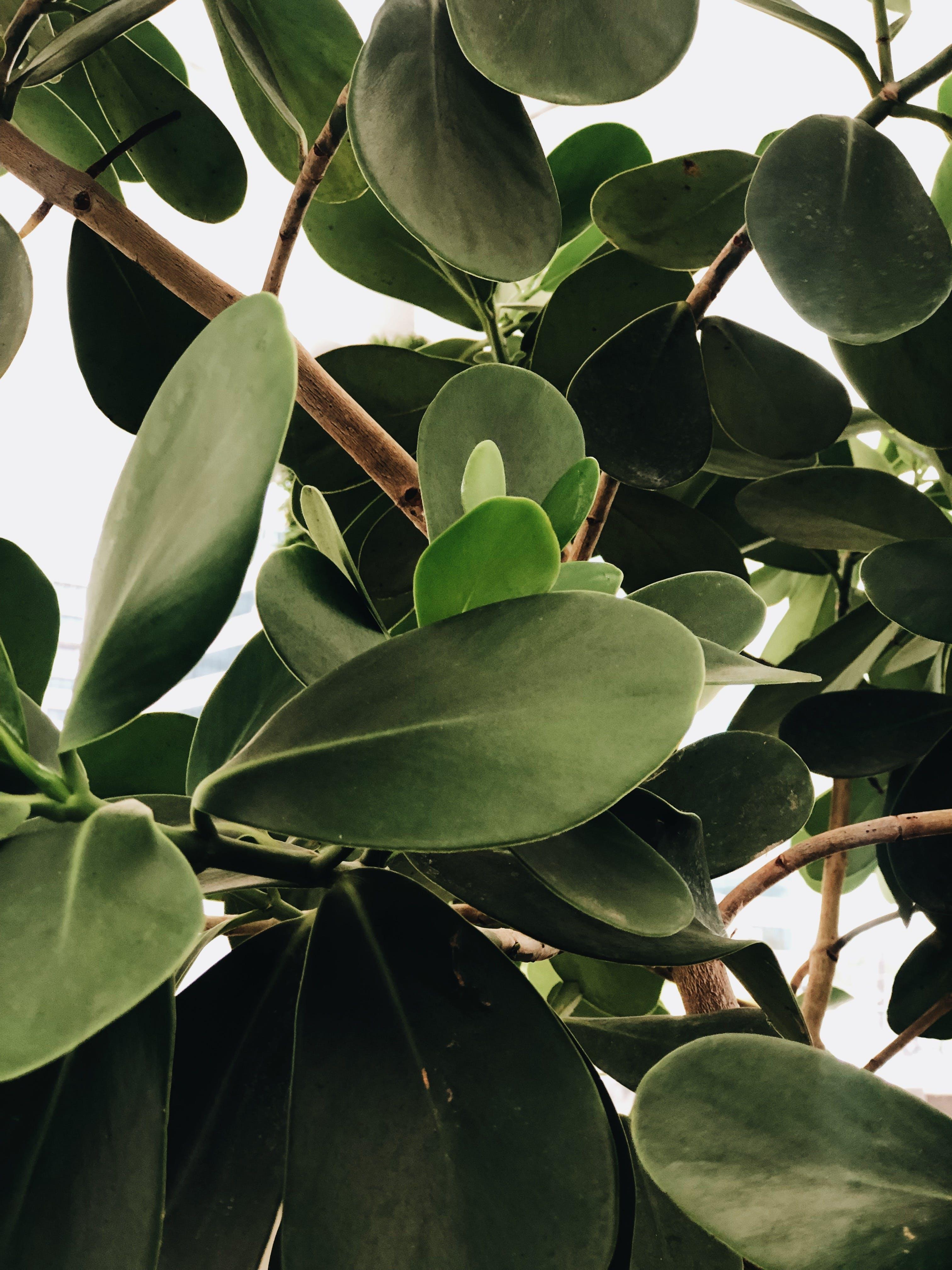 Základová fotografie zdarma na téma bujný, listoví, růst, strom