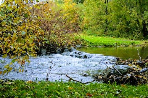 Kostnadsfri bild av grand river, höstfärger, höstlöv, mörkgrön