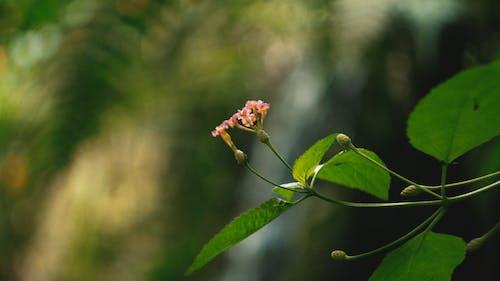 çiçek içeren Ücretsiz stok fotoğraf