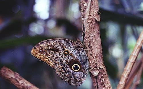 Бесплатное стоковое фото с бабочка, бабочка сова, беспозвоночный, ветвь