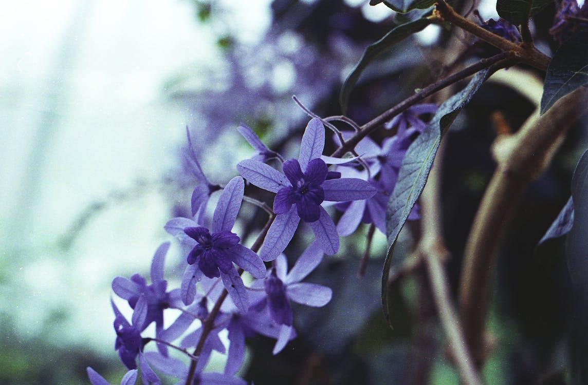 delikatny, dzikie kwiaty, flora