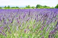 field, flowers, garden