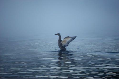 動物, 帥氣, 藍色的水 的 免費圖庫相片