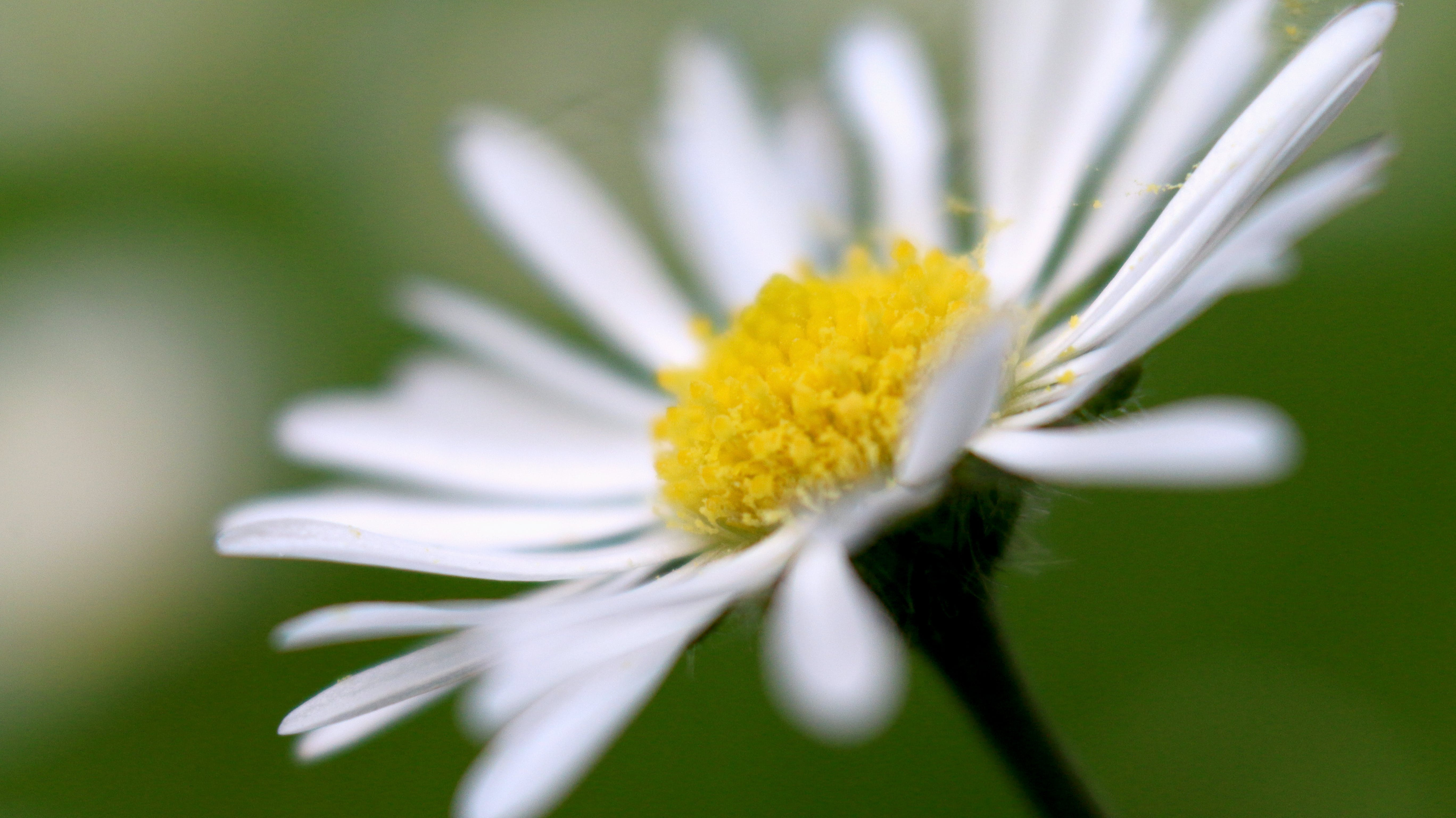 Selective Focus Photography of White Petaled Flower in Bloom