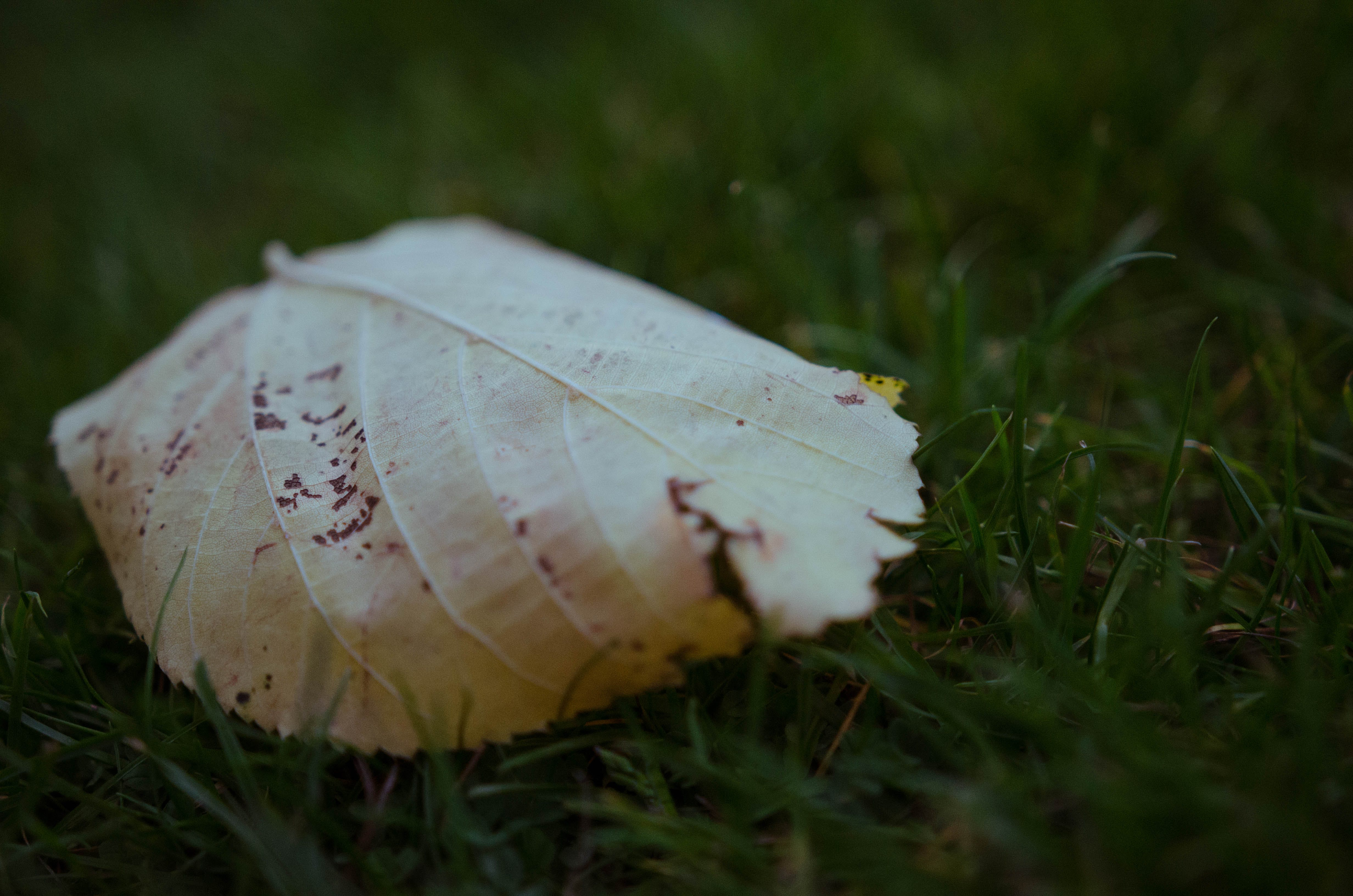 Free stock photo of grass, leaf, leaves, shallow