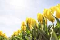 sunny, field, flowers