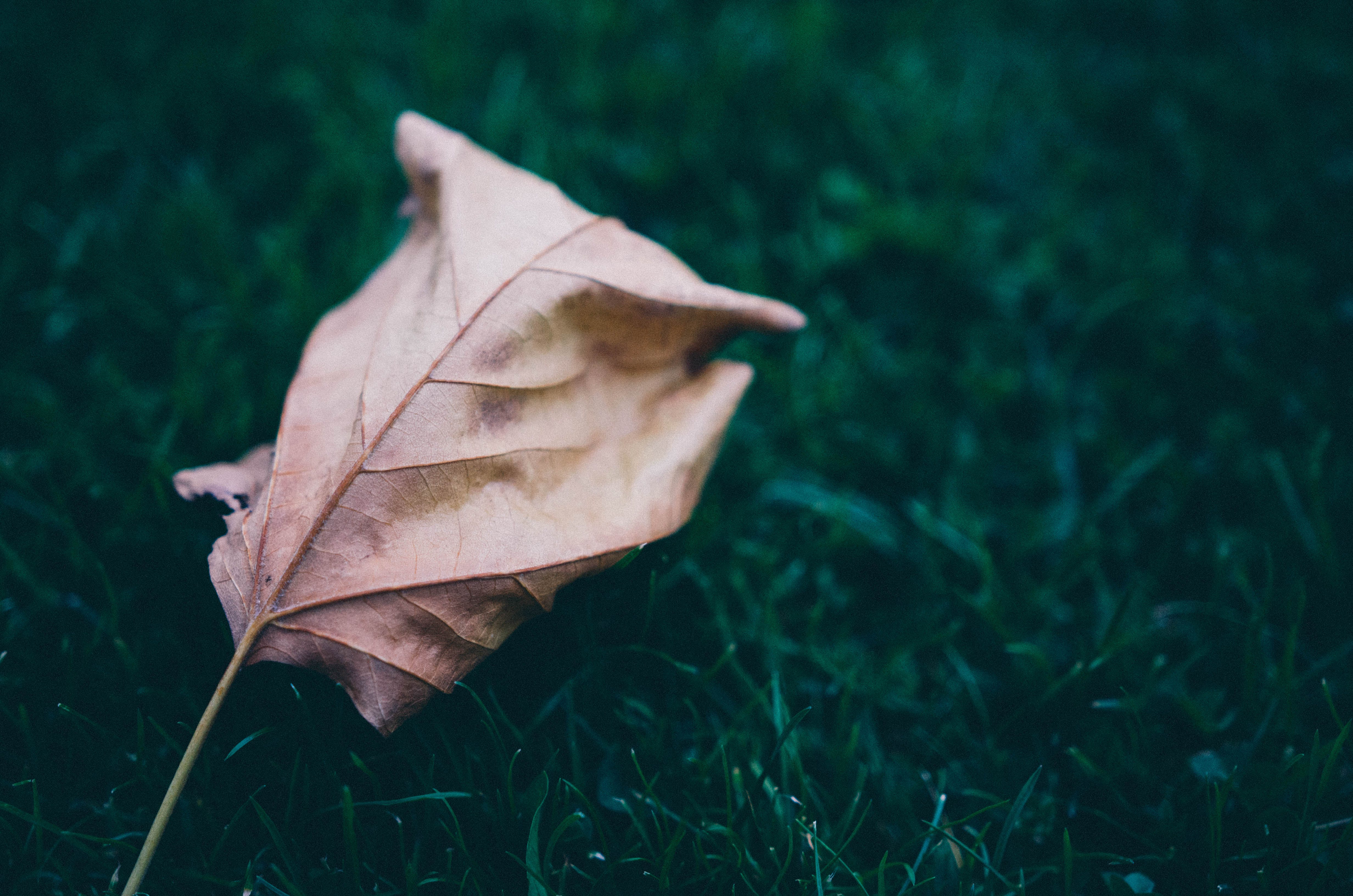 Free stock photo of grass, leaf, leaves