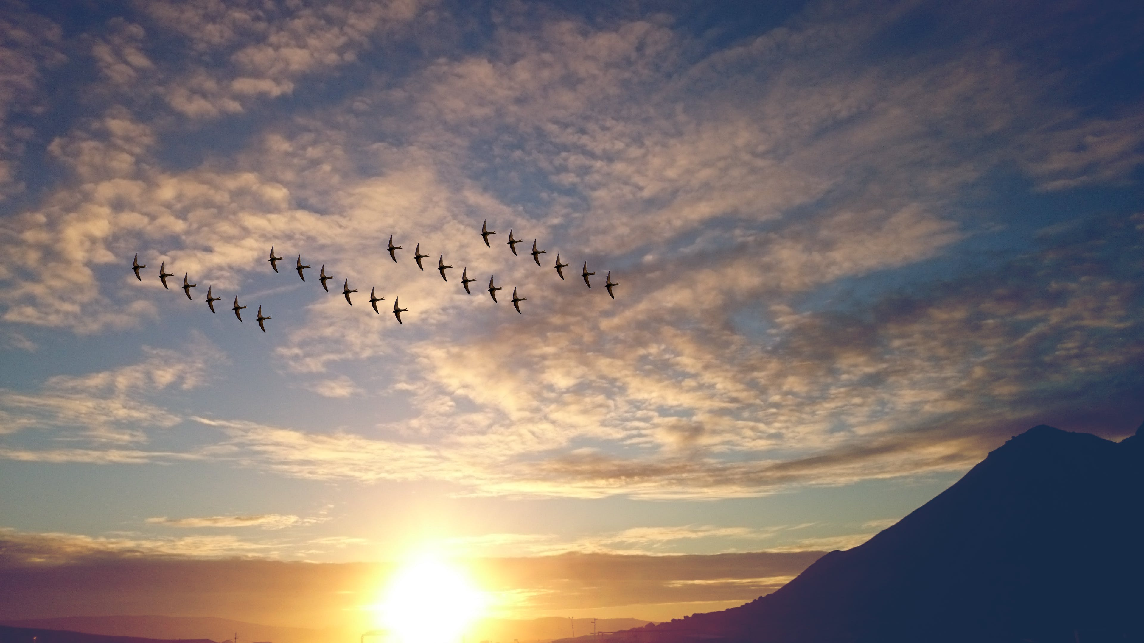 4 Rosw of Birds Flying