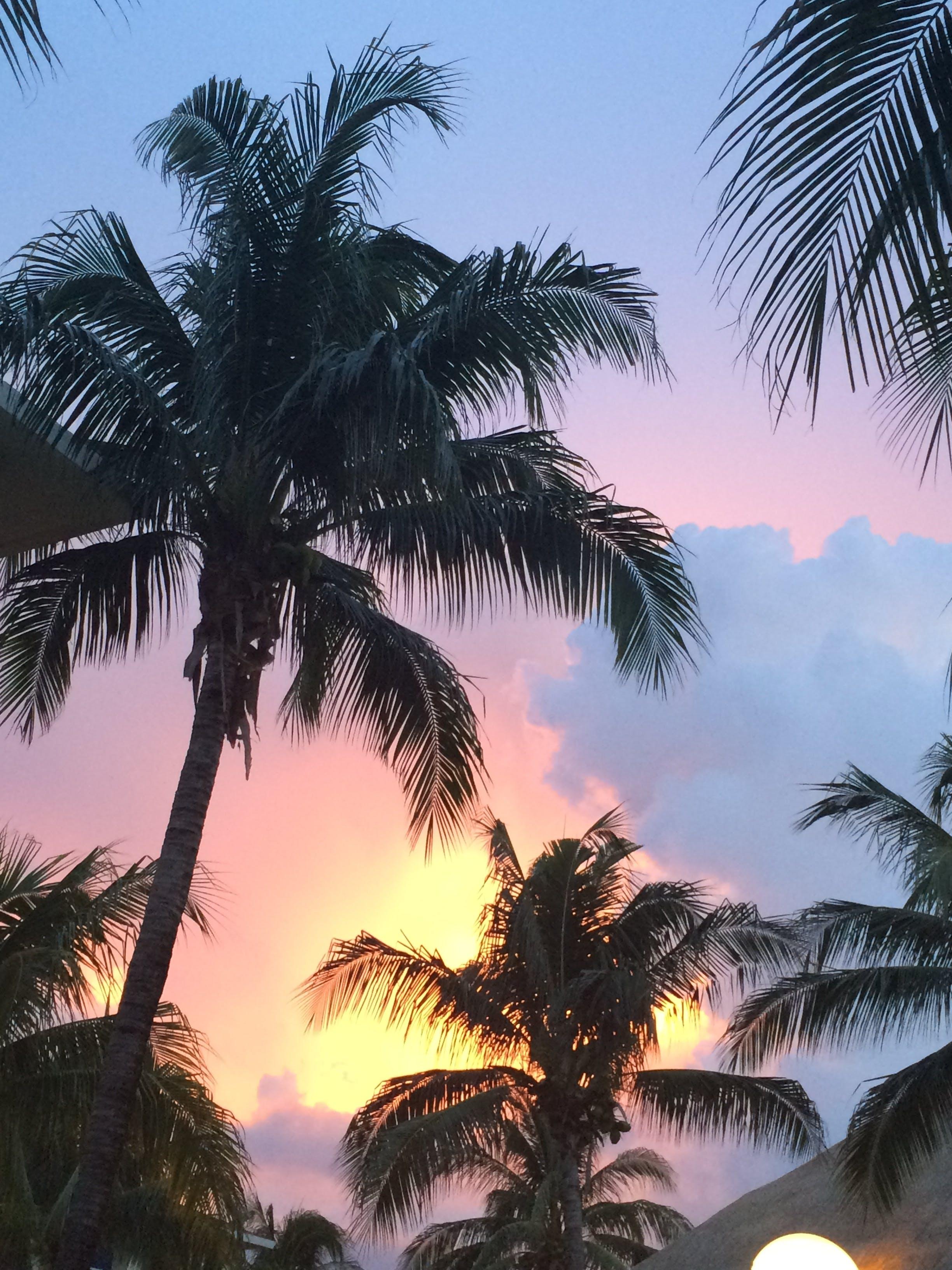 Kostenloses Stock Foto zu palme, sonnenuntergang, urlaub
