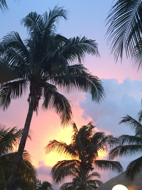 Free stock photo of holiday, palm tree, sunset