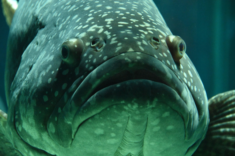 Immagine gratuita di acqua, acquario, animale, fauna selvatica