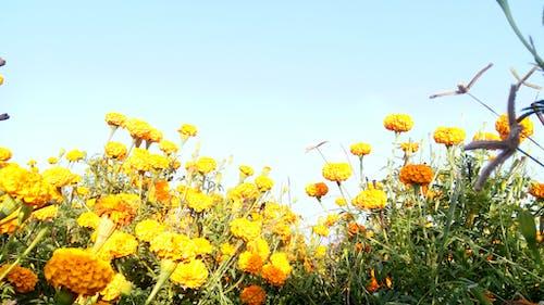 Δωρεάν στοκ φωτογραφιών με κίτρινα άνθη, λουλούδια