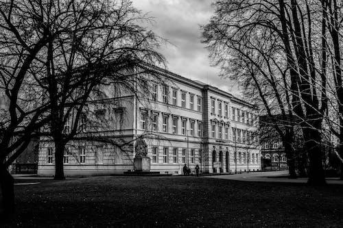 Бесплатное стоковое фото с архитектура, деревья, здание, черно-белый