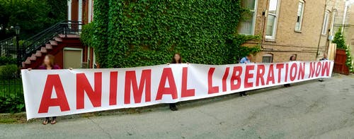 Free stock photo of animal liberation now, animal rights, ar banner