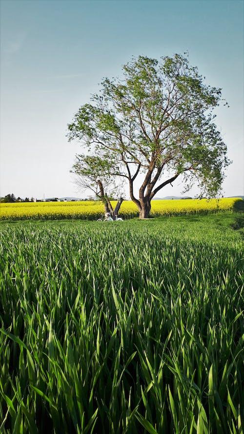 Darmowe zdjęcie z galerii z boiska, drzewa, lato