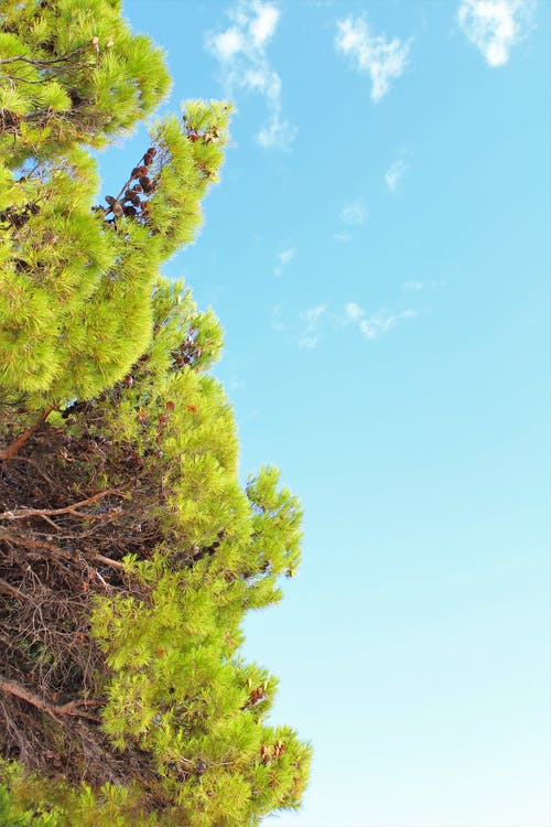 Darmowe zdjęcie z galerii z chorwacja, drzewa, drzewo, lato