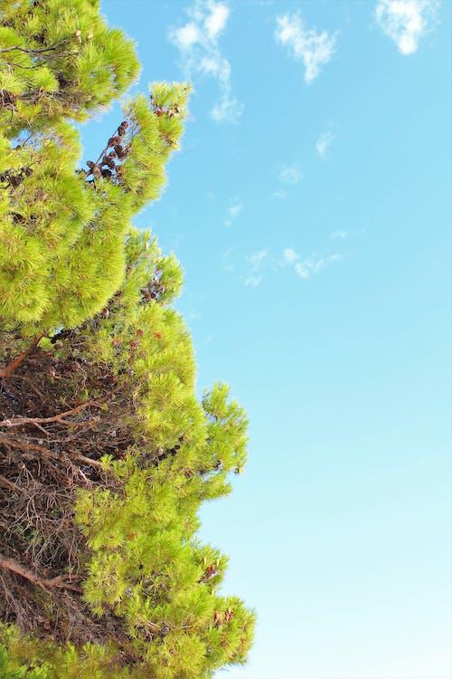 дерево, деревья, летняя атмосфера