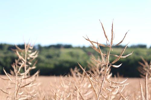 Darmowe zdjęcie z galerii z lato, letnie motywy, pole