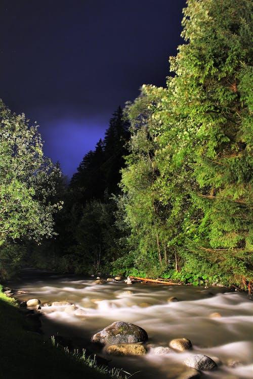 Darmowe zdjęcie z galerii z drzewa, fotografia nocna, noc, przepływ wody