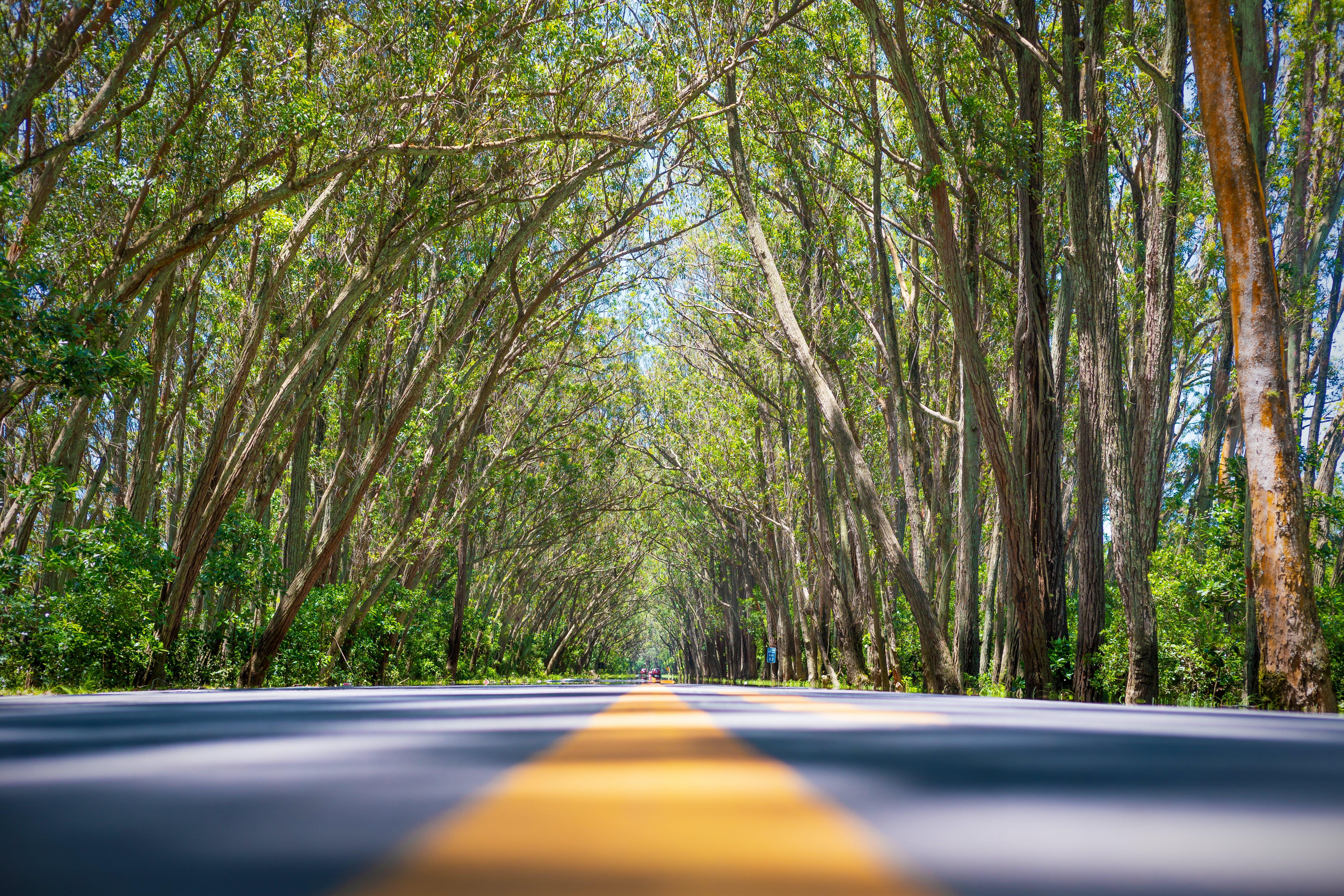 bujný, dálnice, denní světlo
