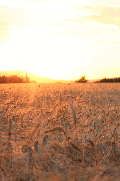 Kostnadsfri bild av fält, solnedgång, sommar, sommartid