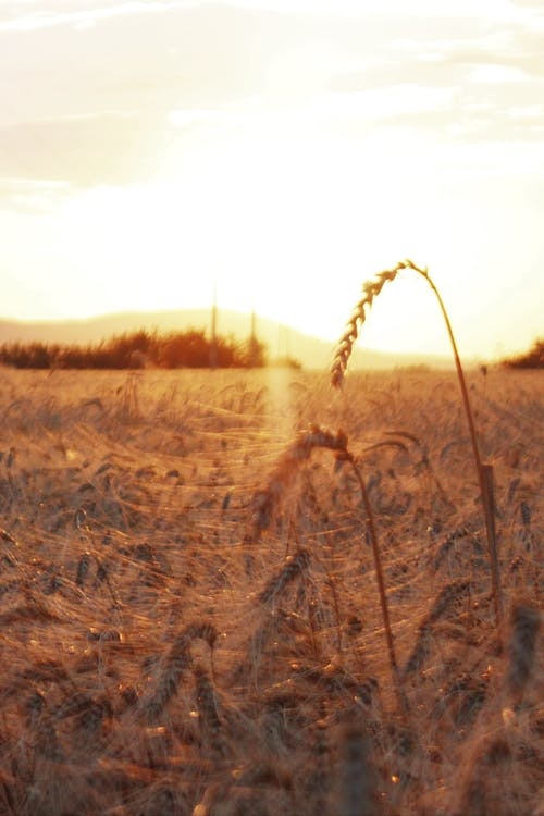 Kostnadsfri bild av fält, jordbruksmaskin, solnedgång, sommar
