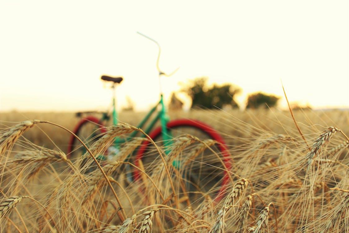 велосипед, глубина резкости, зерно
