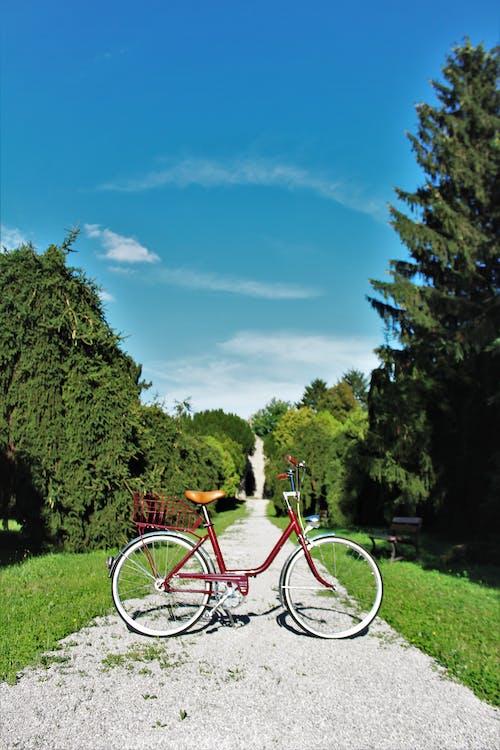 bisiklet, çim, gün ışığı, keçi yolu içeren Ücretsiz stok fotoğraf