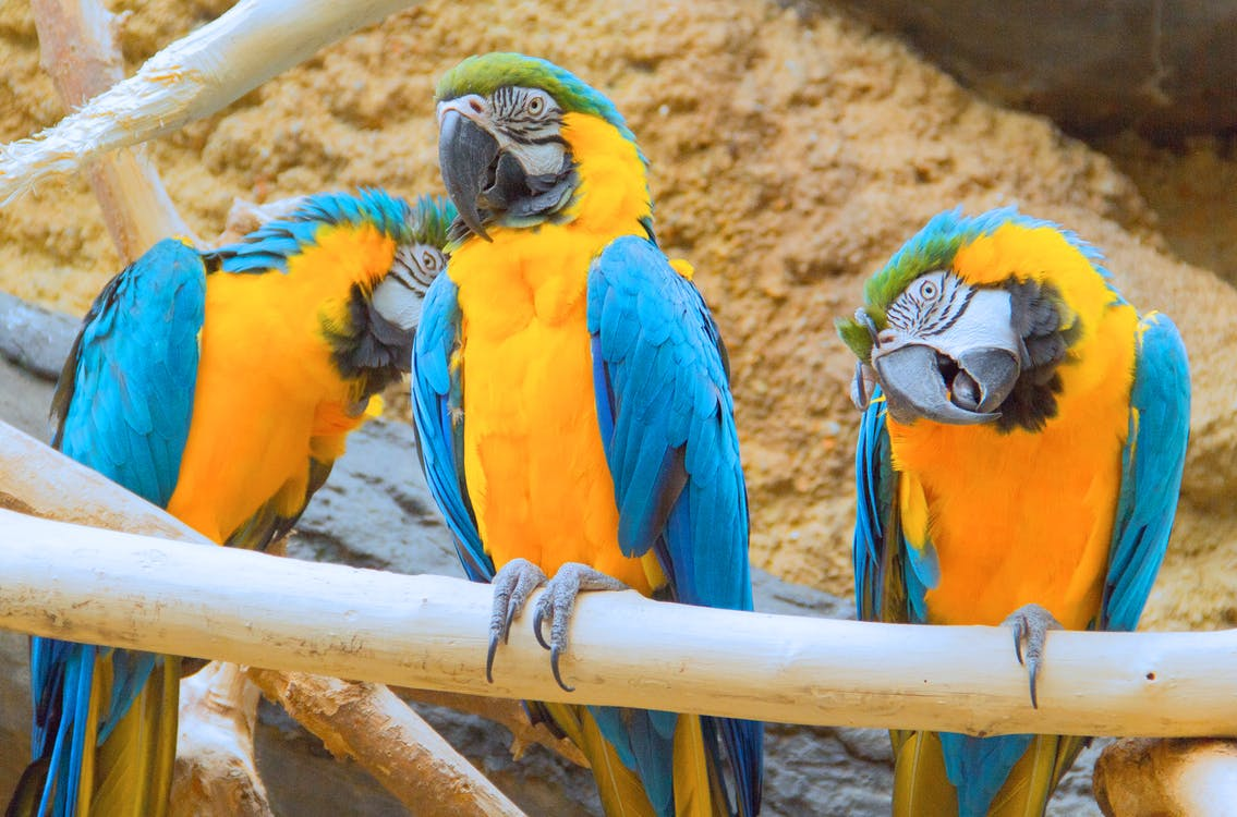 Free stock photo of animals, macaw, nature