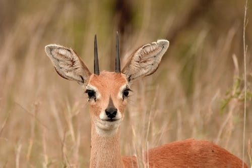 Close-Up Photo of Deer