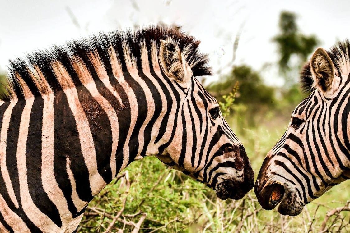 close-up, dyr, dyrefotografering