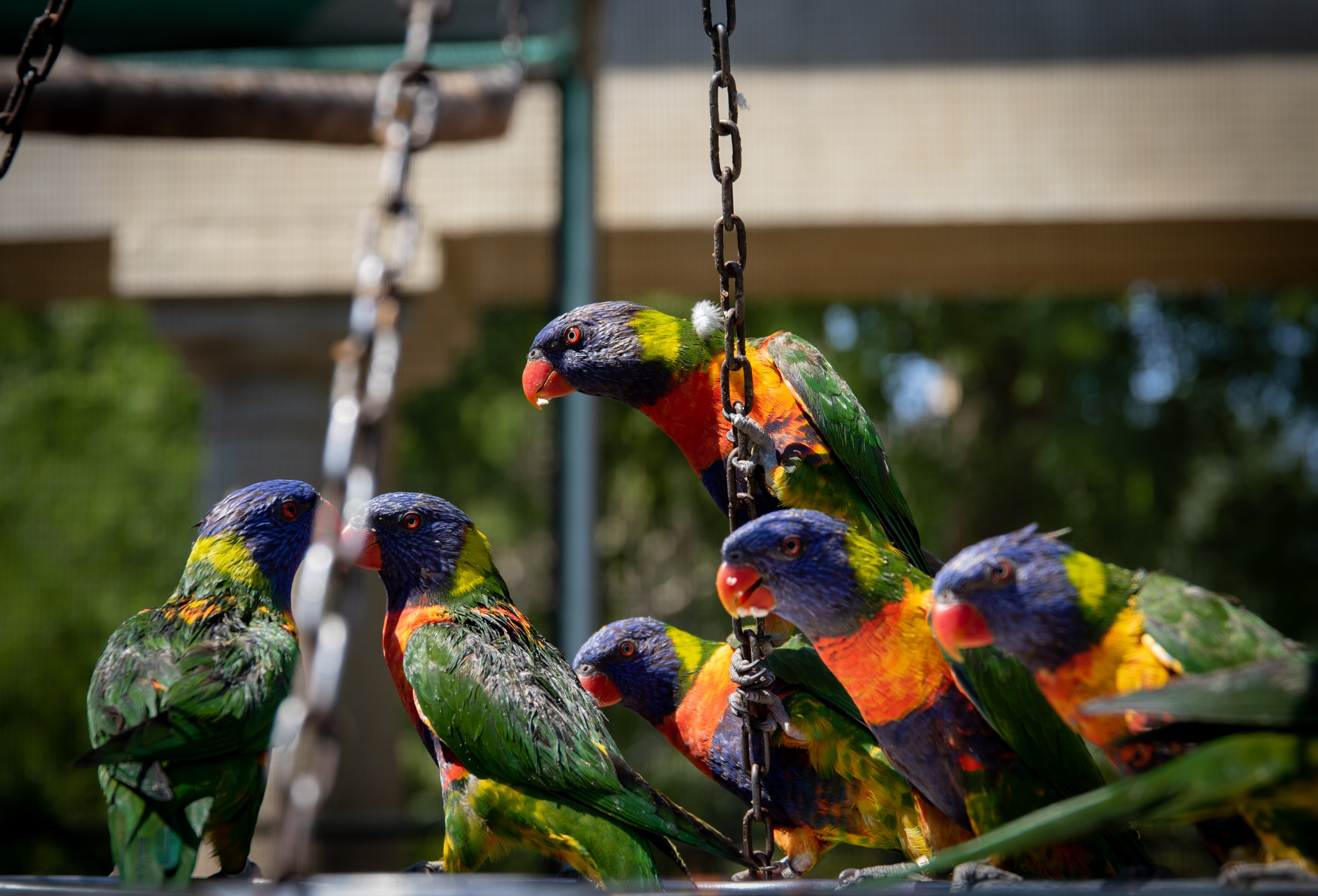Photo Of Colorful Birds