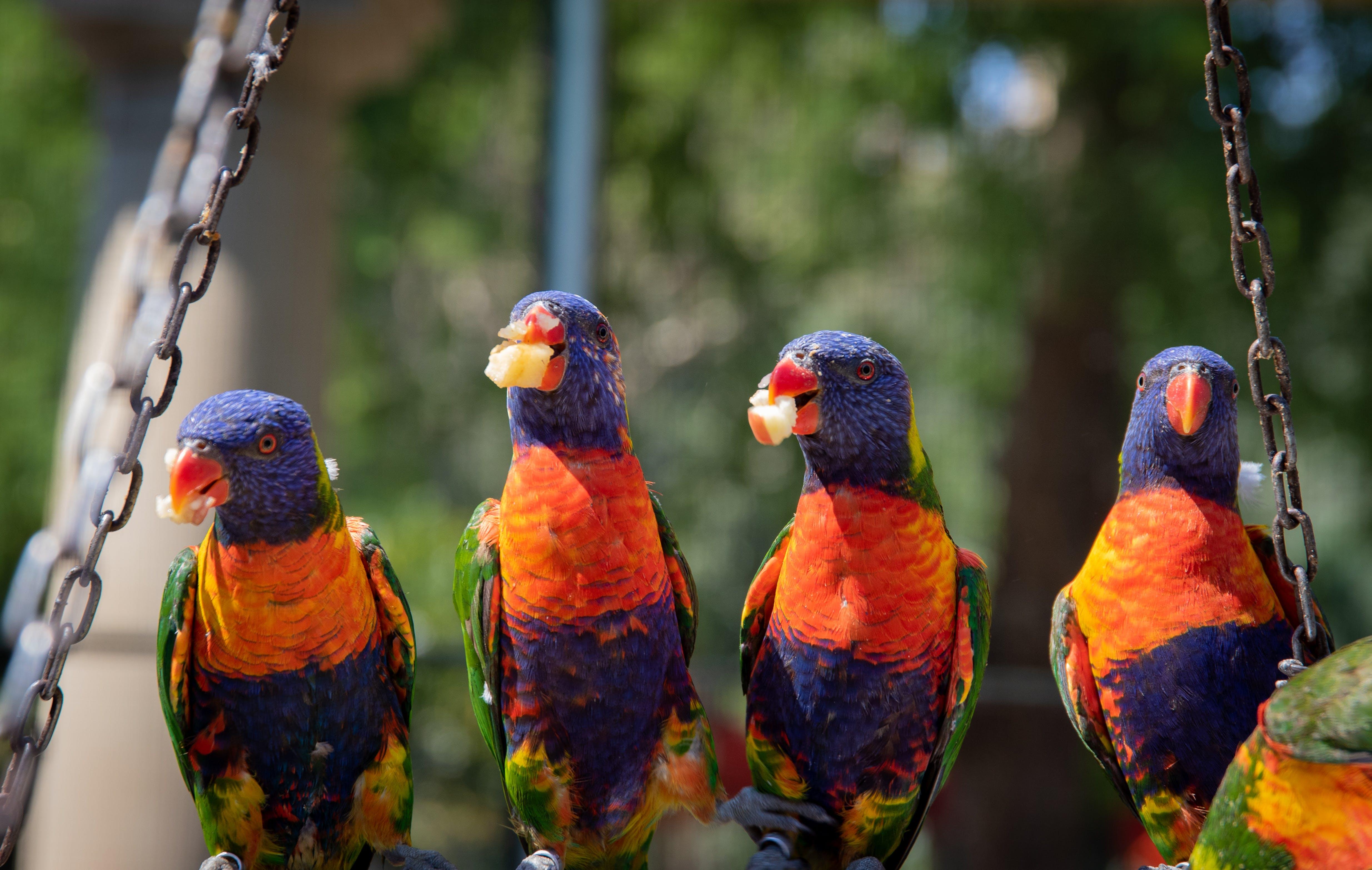 Close-Up Photo of Four Parrots