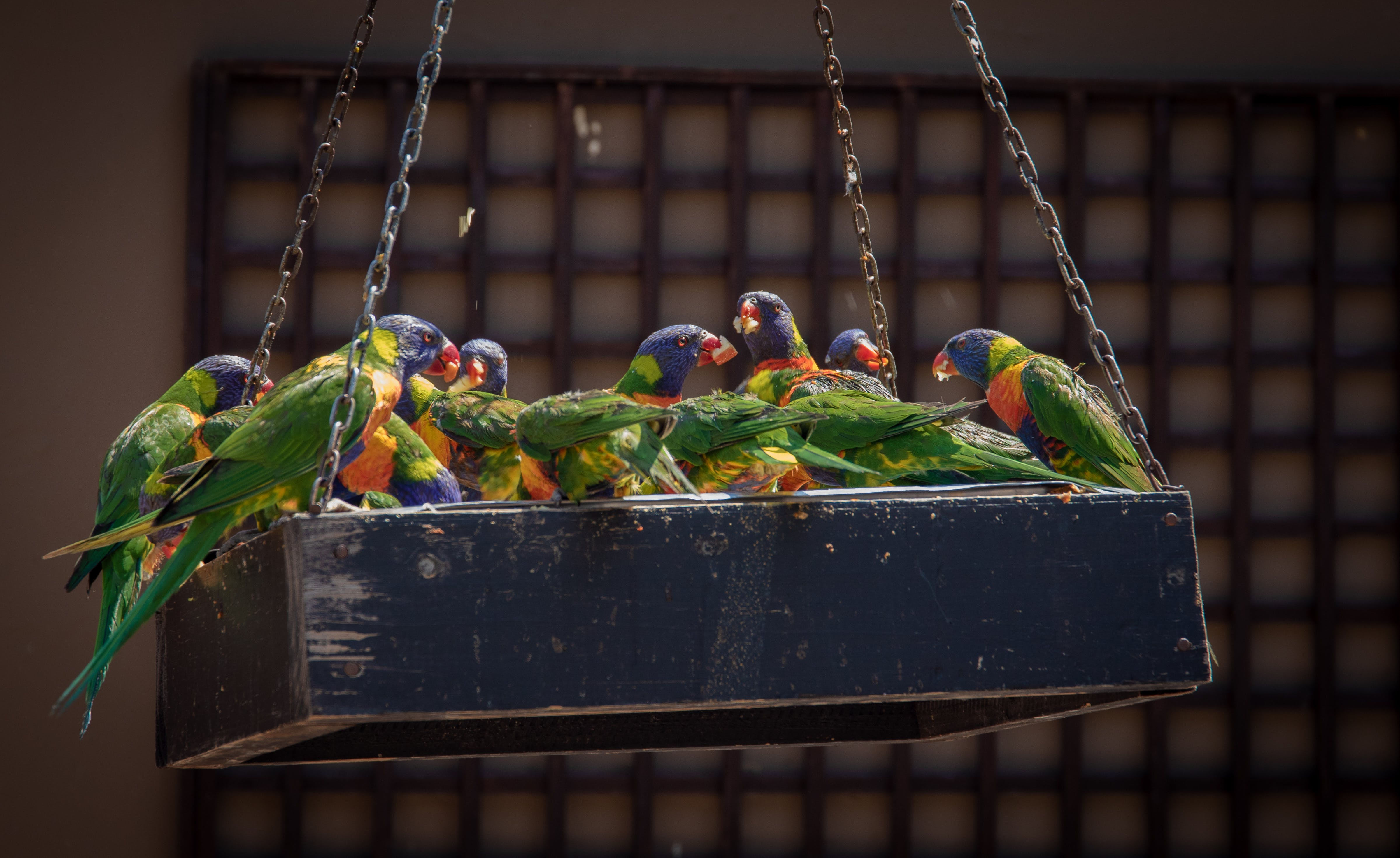 Photo of Group of Parrots
