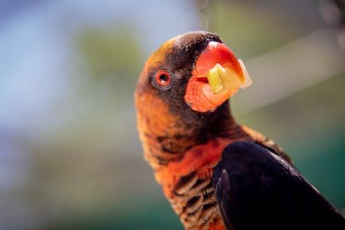 Kostnadsfri bild av äta, djur, fjädrar, fokus