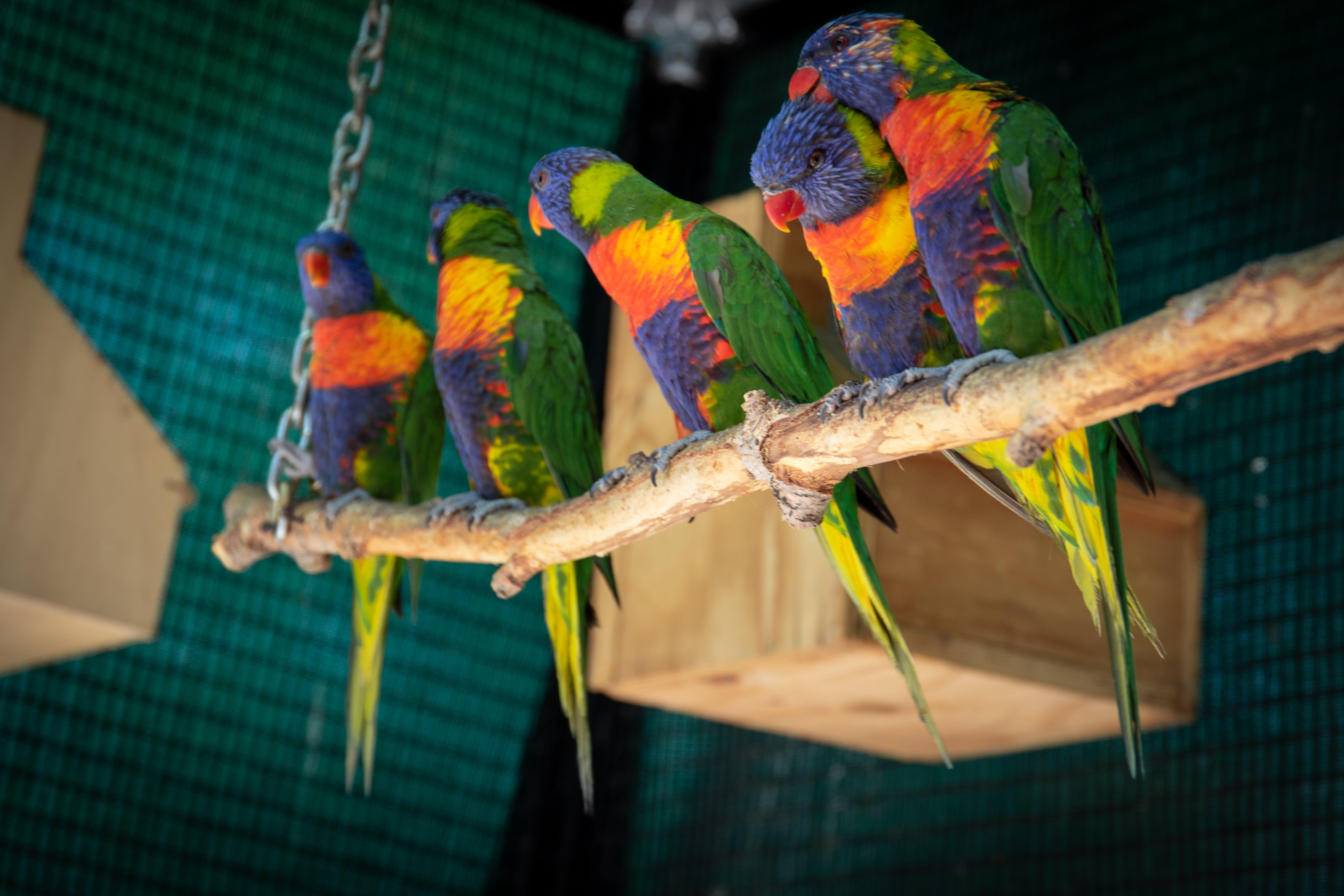 Darmowe zdjęcie z galerii z afryka południowa, ara, dzika przyroda, kolorowy